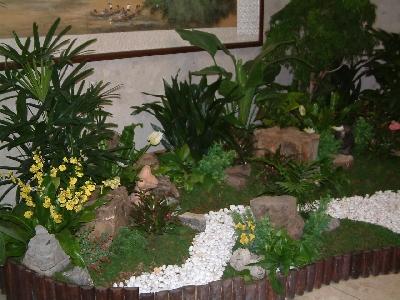 室內植栽創意組合造景