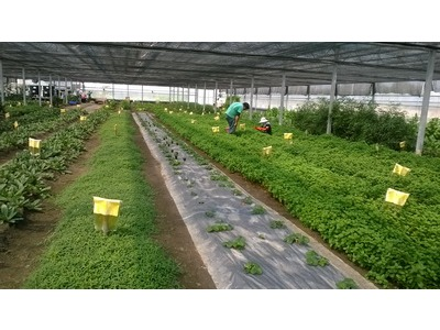 天癒農法示範農場