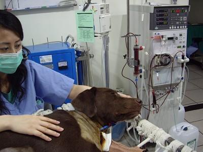 英國皇家動物醫院相關照片5