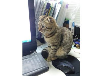 有貓咪陪上班