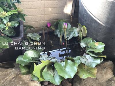綠常春園藝有限公司相關照片2