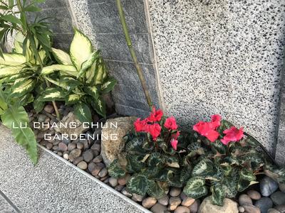 綠常春園藝有限公司相關照片5