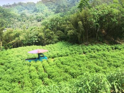 12公頃香草研發基地
