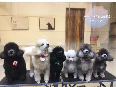 CAMA CAMA 寵物美容(晨曄寵物店)相關照片3