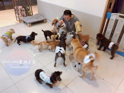 CAMA CAMA 寵物美容(晨曄寵物店)相關照片6