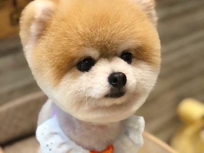 CAMA CAMA 寵物美容(晨曄寵物店)相關照片7