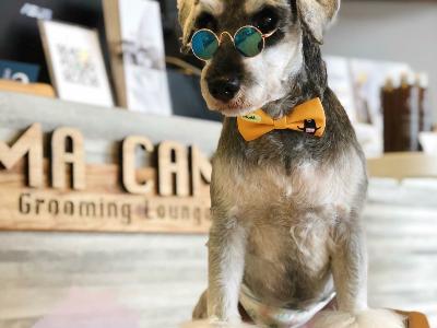 CAMA CAMA 寵物美容(晨曄寵物店)相關照片9