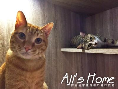阿吉的家捷運出口貓咪旅館(美麗國度實業社)相關照片2