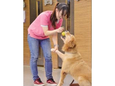 動物行為訓練