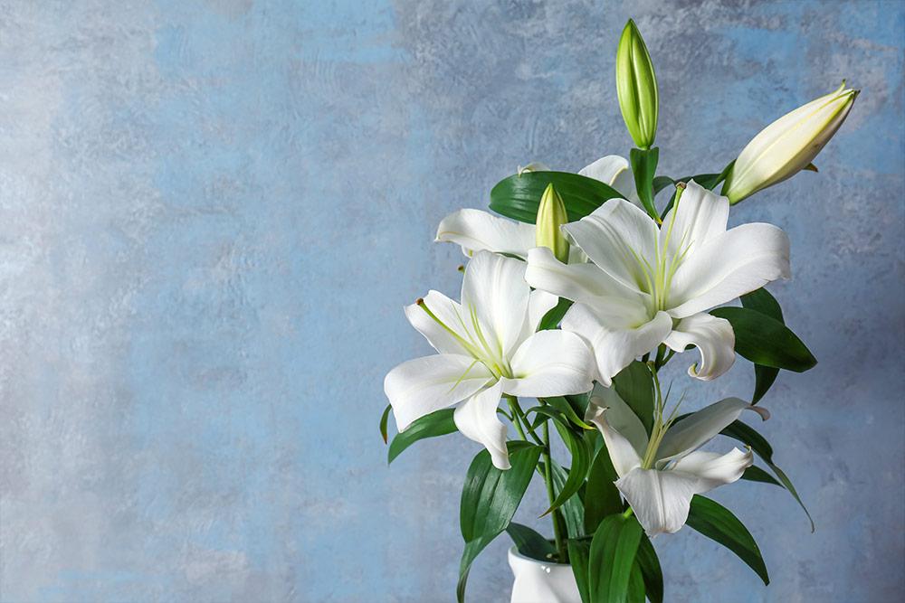 在辦公桌右側擺放百合花,有助於職場人際關係。
