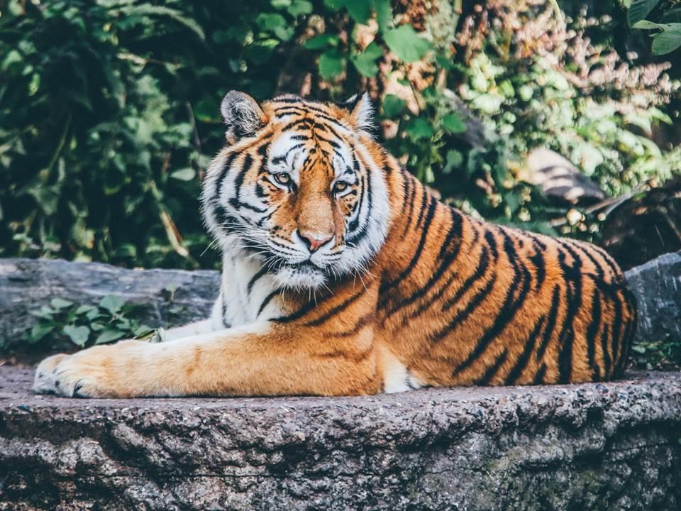 工作上,你是老虎還是無尾熊?3分鐘測出你是哪種人才